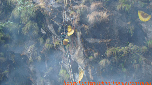 honey hunting close to the naiche village in lamjung district nepal